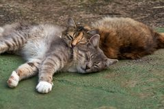 Homeless cats are warmed up in the sun stock images