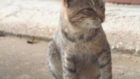 Homeless Cute Multicoloured Cat Outside. Close up stock video footage