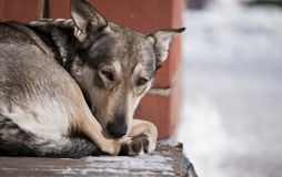 Homeless Dog Stock Image