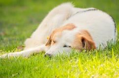 Homeless dog Stock Image