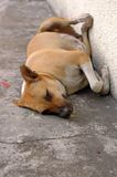 Homeless Dog. A homeless dog sleeping by the road side Stock Image