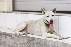 Homeless dog Royalty Free Stock Images