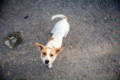 Homeless dog Royalty Free Stock Photo
