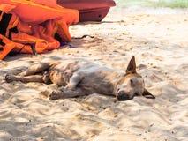 Homeless dog on the beach Royalty Free Stock Photos