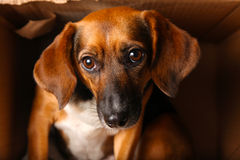 Homeless Dog in Box Royalty Free Stock Images