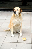 Homeless Dog and Bread Royalty Free Stock Photos