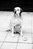 Homeless Dog and Bread stock photos