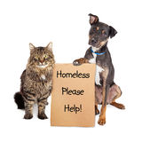 Homeless Dog and Cat With Sign Royalty Free Stock Photo