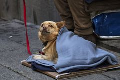 Homeless dog in cold season Royalty Free Stock Photos