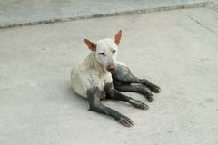 Homeless dog. On concrete floor Royalty Free Stock Image