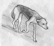 Homeless dog. Hand drawn pencil sketch of a hungry stray dog walking Stock Photo