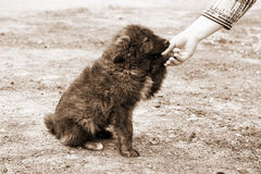 Homeless dog and helping human hand stock images