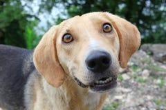 Homeless dog Royalty Free Stock Photos