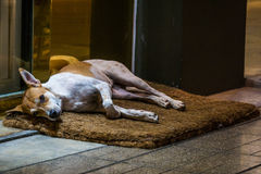 Homeless dog lie on foot mat infront of shop. At night market royalty free stock photography