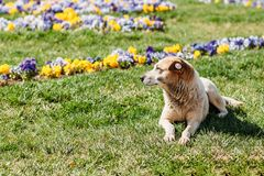 Homeless dog lies on backwater flowers stock photos