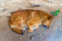 The homeless dog lies in the street Royalty Free Stock Photos