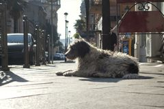 Homeless dog lies in the street.  royalty free stock images