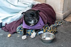 A homeless dog lying alone and depressed on the street feeling anxious and lonely in sleeping bag and waiting for food. The. Concept of homelessness stock photography