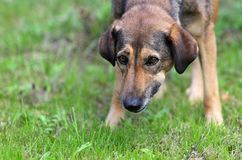 Homeless dog on a meadow Royalty Free Stock Photos