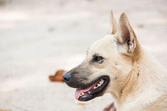 Homeless Dog On The Park. Royalty Free Stock Photo