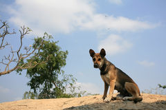 Homeless dog rests on the cliff. Outdoor: Homeless dog rests on the cliff Royalty Free Stock Images