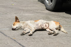 Homeless dog on the road. Hungry and skinny homeless dog on the road stock images