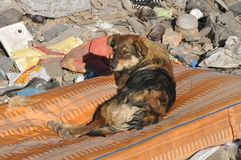 Homeless dog with sad eyes on the garbage dump royalty free stock images
