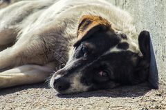 Homeless dog with sadness in his eyes lies on the ground. A homeless dog with sadness in his eyes lies on the ground Stock Photos