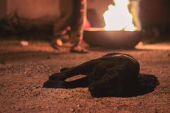 Homeless dog with sadness in his eyes lies on the ground. Near campfire Stock Images