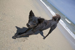 Mongrel on the sea shore. Homeless dog on seacoast Stock Photography