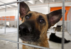 Homeless dog shelter. Close-up of homeless dog in a shelter, looking at camera behind bars stock images