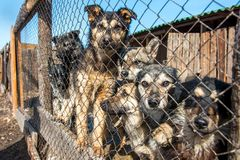 Homeless dog shelter Royalty Free Stock Images