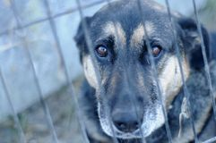 Homeless dog in the shelter Stock Photos