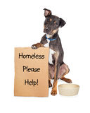 Homeless Dog With Sign and Empty Bowl Stock Photography