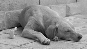 Homeless dog. Sleaping on a street Royalty Free Stock Photos
