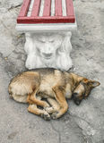 Homeless dog Royalty Free Stock Photos