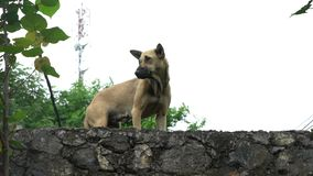 A homeless dog stands in the street outdoors on the roof and looking up at the shooter, sad painful muzzle. A homeless dog stands in the street and looks at the stock video