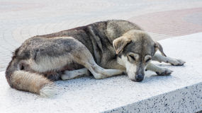 Homeless dog Stock Photos