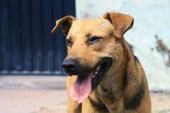 Homeless dog Stock Photography