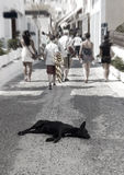 Homeless dog on the street Royalty Free Stock Images