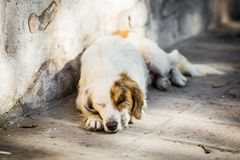 Homeless dog on the street. Old and sleepy royalty free stock image