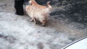 Homeless dog on the street stock video