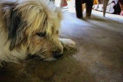 Dog Sleep. Homeless dog on the streets.Sad and homeless dog.A sad and homeless dog abandoned on the streets stock image