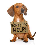 Homeless dog to adopt stock photography