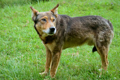 Homeless dog Stock Images