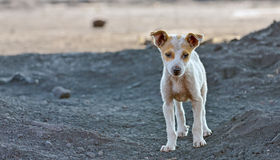 Homeless dog. Waiting something in a royalty free stock images