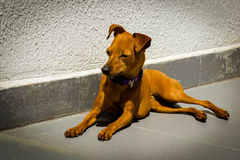 Homeless dog waiting something in a slag Royalty Free Stock Images