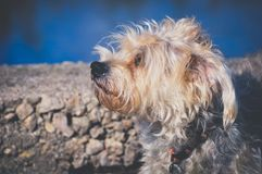 Dog is waiting to its new owner and new home. Homeless dog is waiting to its new owner, homeless dog is lost. Dog is dreaming about his new home. Life and dog Stock Photos