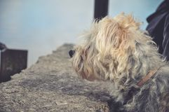 Dog is waiting to its new owner and new home. Homeless dog is waiting to its new owner, homeless dog is lost. Dog is dreaming about his new home. Life and dog Royalty Free Stock Images