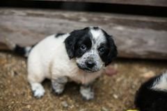 Homeless dog is waiting to its new owner and new home. Cute Little black and white puppy in a wooden box is asking to be adopted with hope. Homeless dog is stock photos
